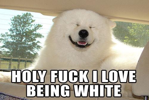 a polar bear likes being white