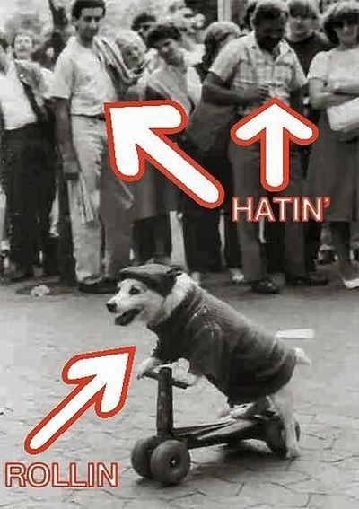 Dog rolling, others hatin